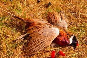 Wil-Nor pheasant 2 copy