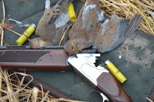 Annual Wil-Nor Dove Hunt